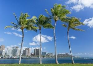 Hawaï fotlia