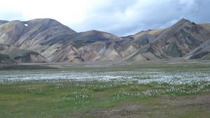 ISLAND 2009 229