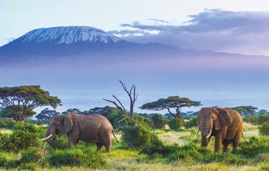 Savane safari éléphant - Esprit Pionnier