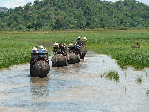 safari à dos d'éléphant dans la jungle