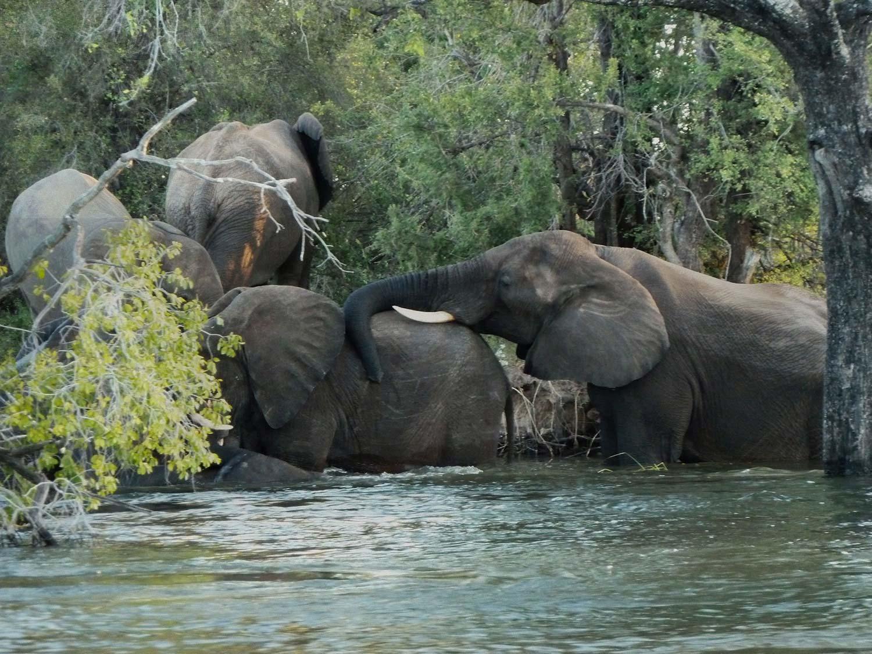 Image de l'article : Un safari à pied au Parc National de Hwange, au Zimbabwe - Esprit Pionnier