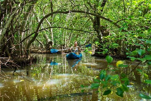Canoë sur mangrove