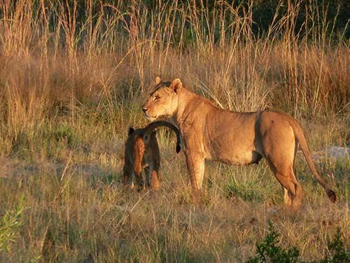 Image de l'article : Safari bivouac en famille au Botswana - Esprit Pionnier