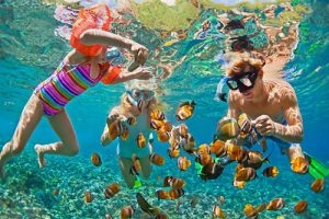 Snorkeling Maldives poissons
