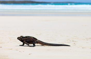 Image de l'article : Dépaysement total et rencontres insolites aux îles Galápagos - Esprit Pionnier